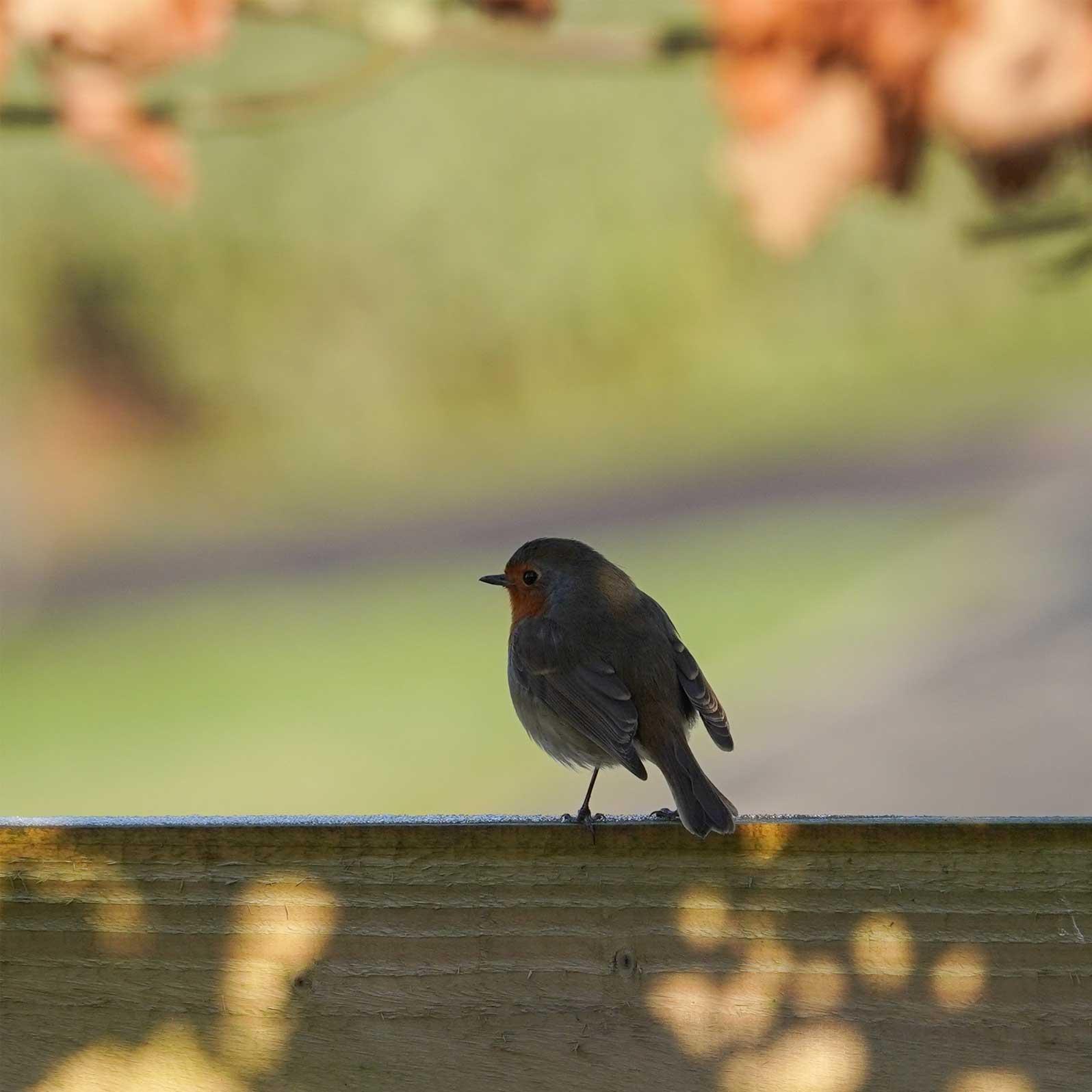robin at houlton